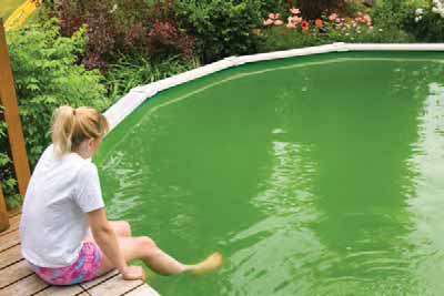 Cleaning a Green Swimming Pool